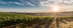 Mövenpick Wein CH: Gratis Lieferung + Spezialangebote